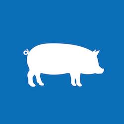 PIP in der Schweinehaltung Icon